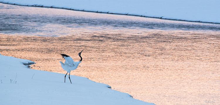 Single crane along the river predawn