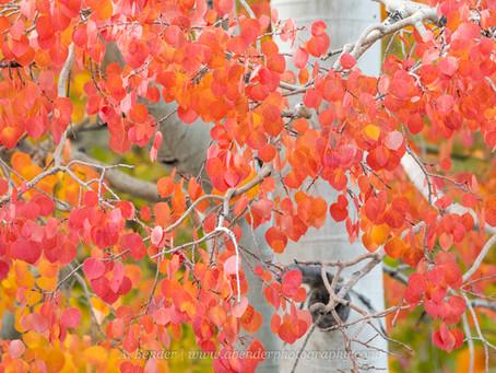 Photographing Autumn in Utah
