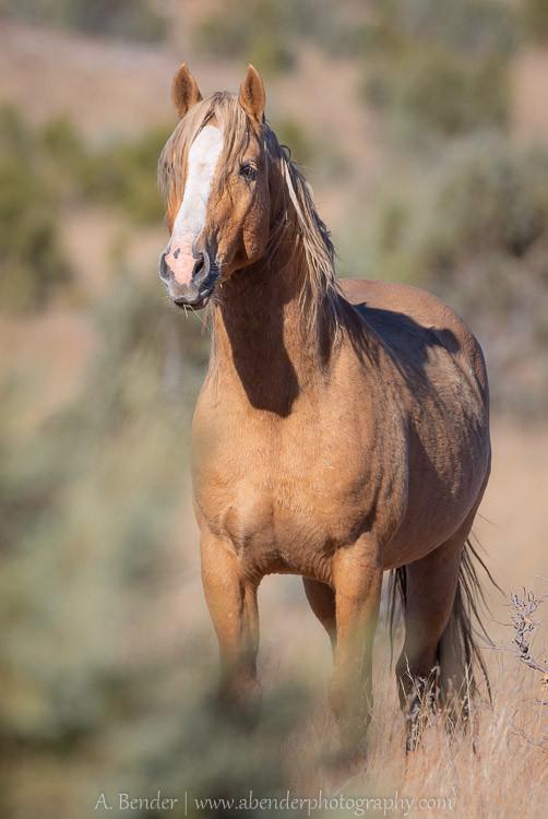On Alert, Heber Herd, Arizona