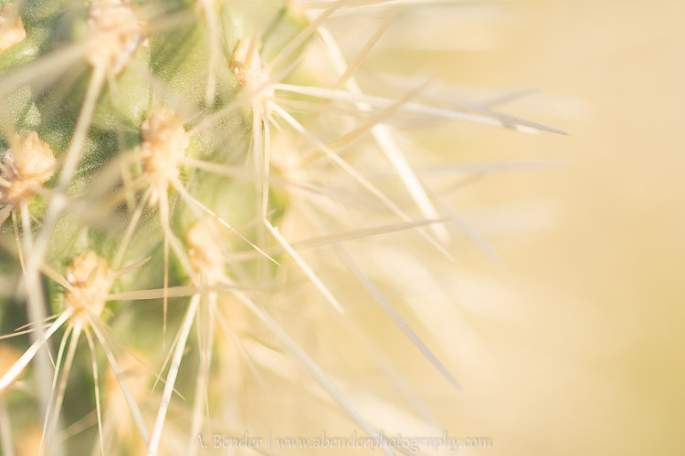 Spines in the Sun, Lake Pleasant, Arizona