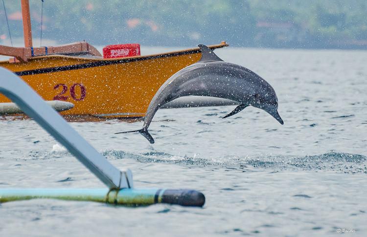 """""""Leading the Chase"""" Lovina, Bali"""