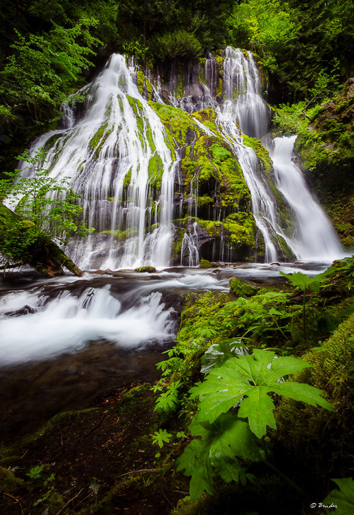 Panther Creek Falls (vertical)