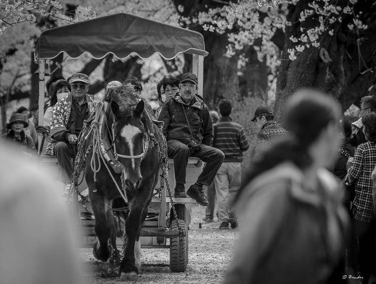 Black and white of horse drawn carriage being pulled down the lane.