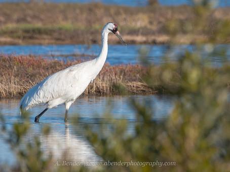 In Search of a Rare Bird