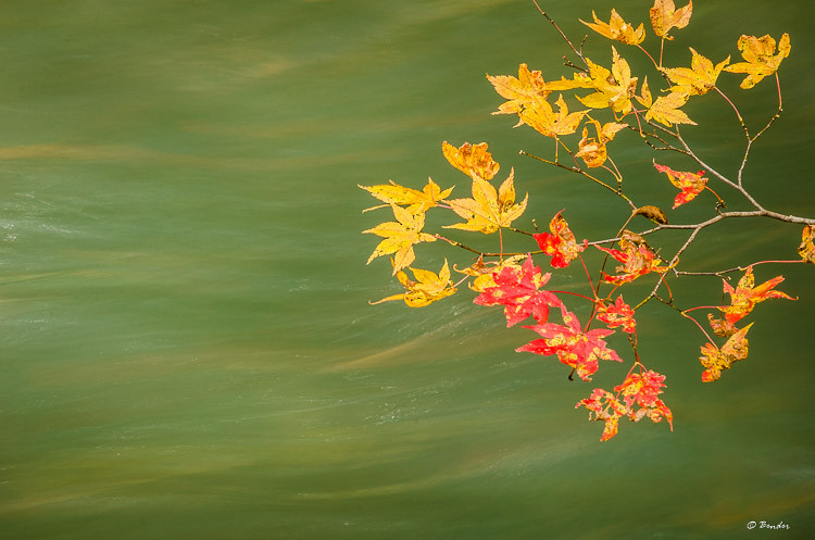 Autumn leaves against the flow of Oirase Stream