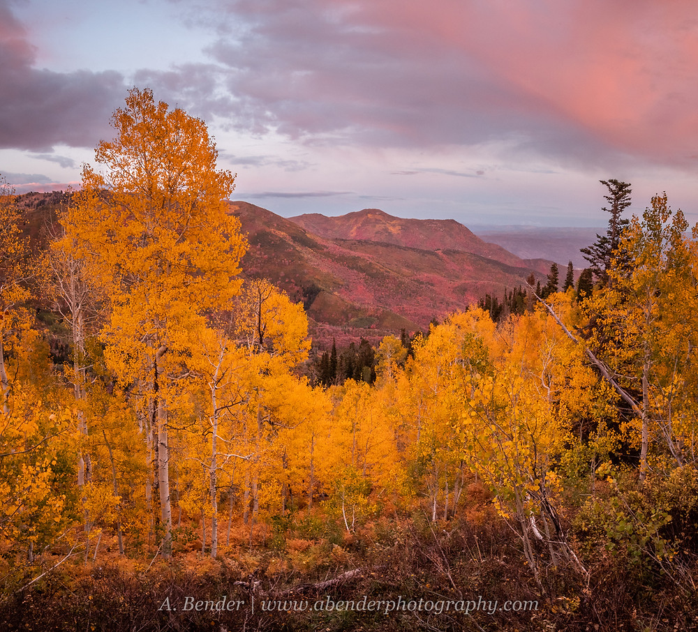 Pink light at sunset colors the view of clouds over distant mountain ridge with a stand of yellow aspen in the foreground in the Wasatch Mountains Utah | A Bender Photography LLC