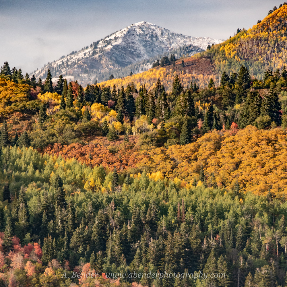 Snow capped mountain peak under stormy skies with a foreground full of layers of ridges with fall autumn colors and evergreens in the Wasatch Mountains Utah | A Bender Photography LLC