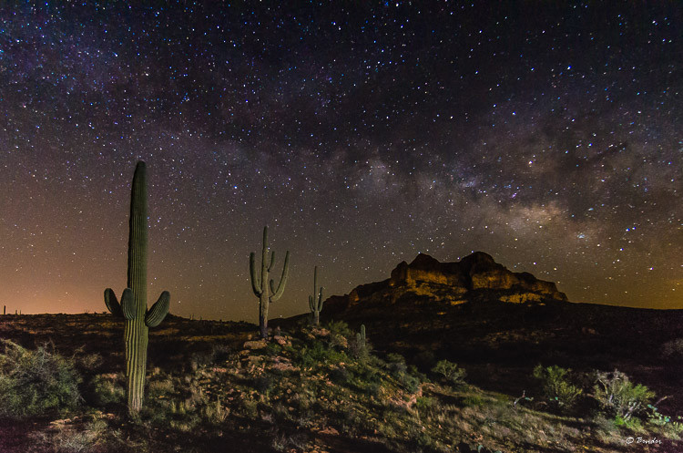 """Stellar Saguaro"" Picketpost Trail"