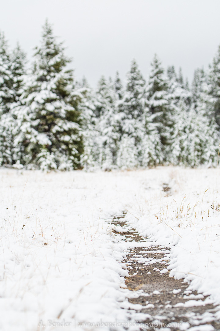 Snowy trail in Yellowstone National Park