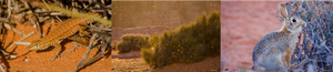 Triptych of lizard, golden hour over desert bushes, and cottontail nibbling