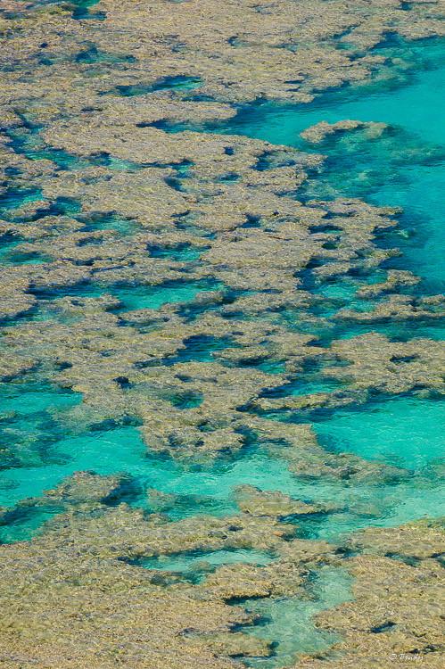 Hanauma Bay reefs from above