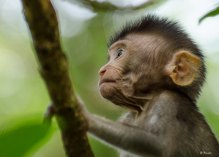 """Taking in a New World"" a baby explores the branches under the watchful eye of his mother."