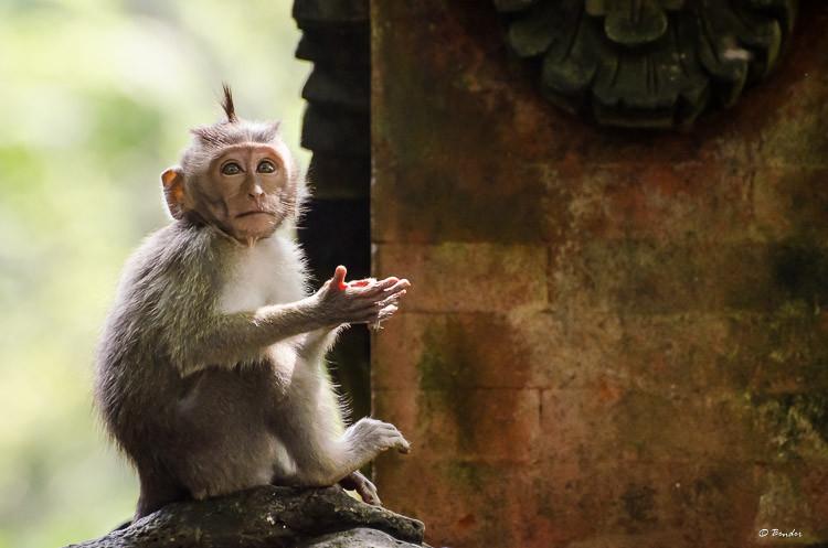 """Slow Clap"" Ubud, Bali"