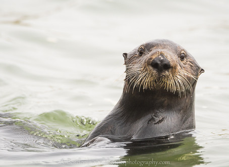 The Wild Side of Monterey, CA