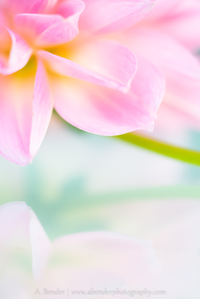 high key image of a pink flower reflected in glass, a bender photography