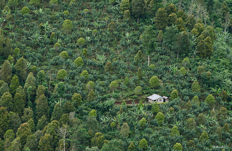House on the hill surrounded by jungle.