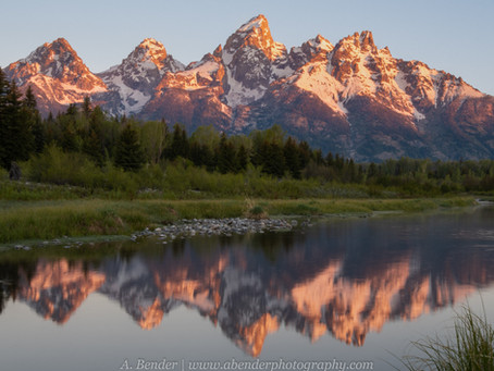 Of Pronghorn and Pika: Photographing Yellowstone and Grand Teton National Park in June