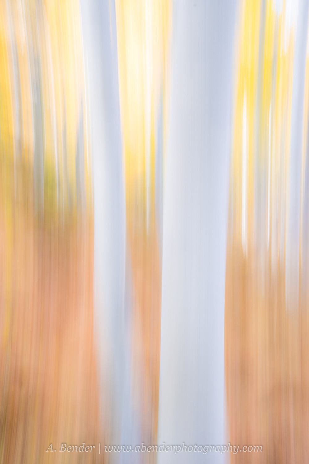 Aspen trees and autumn colored forest captured in an impressionistic abstract look using intentional camera movement Wasatch Mountains Utah | A Bender Photography LLC