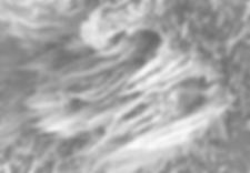 SEM image showing Halloysite Scrolls