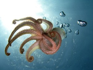 Photo of an octopus