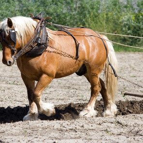 Are You the Workhorse?