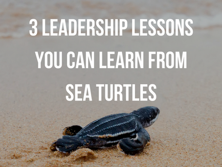 3 Leadership Lessons Learned From Sea Turtles