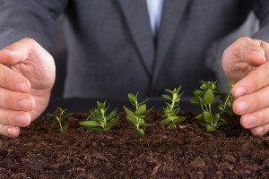 Are You Cultivating Real Growth for Your Career?