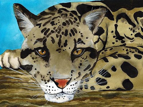 Jungle Cat 4