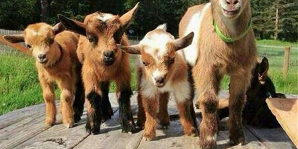 Goat Yoga Fundraiser for Willowbrooke CommUNITY Playground