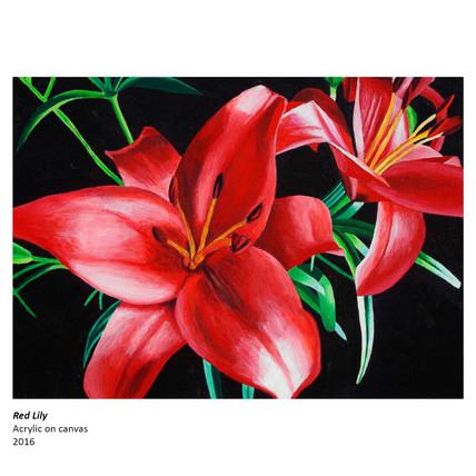 Red Lily_Ian MacIntyre.jpg