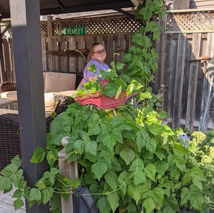 Jessica put love into growing her bean plant.  Does it show ?