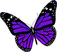 butterfly_PNG1056.png