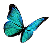 flying-butterfly-clipart-transparent-5.p