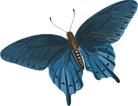 butterfly_PNG1038.png
