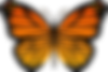 butterfly_PNG1048.png