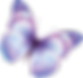 butterfly_PNG1040.png