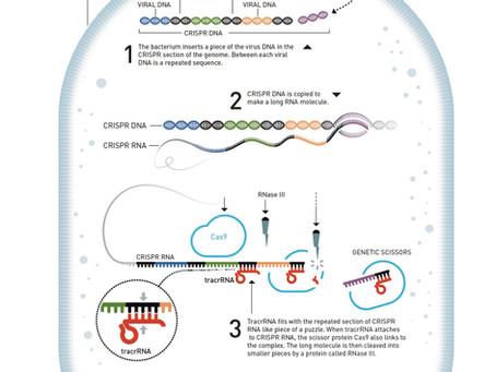 CRISPR/Cas9 and its applications