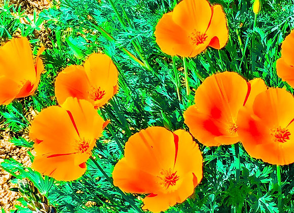 Floating Poppies
