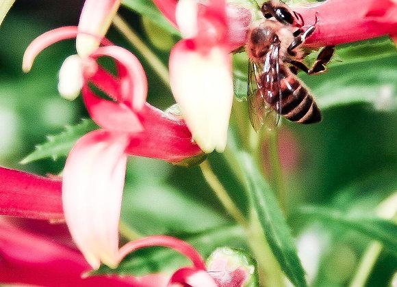Bee on Trumpet Fine