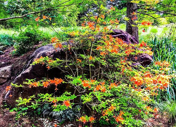 PA Woodland Flowers