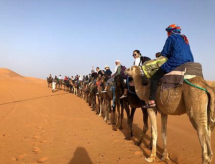 Camel Group .JPG