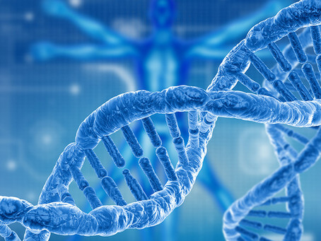 Genetics and the Onset of Obesity