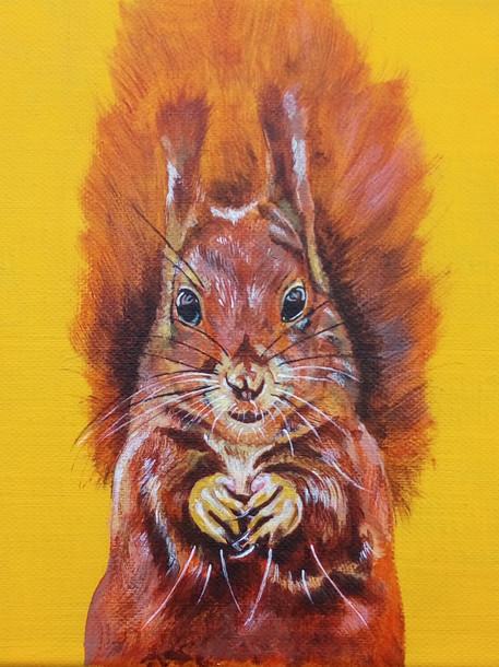 Squirrel £60