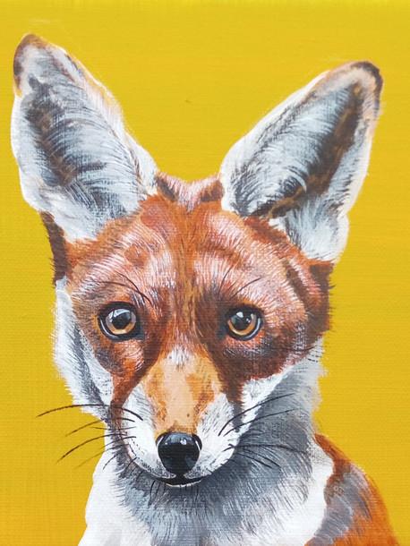 Fox £60