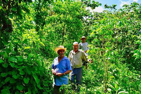 Acheter Café Grains Mexicain Bio Équitable .jpg