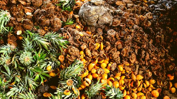 Compost Bio Cerises Café spécialité