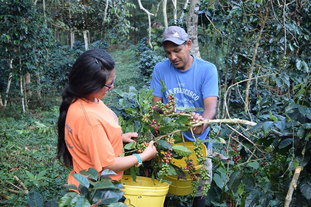 Acheter Café Pérou Bio Équitable