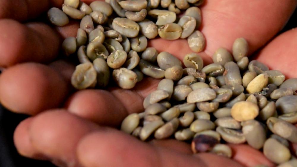 Acheter Café vert Grains Bio Équitable