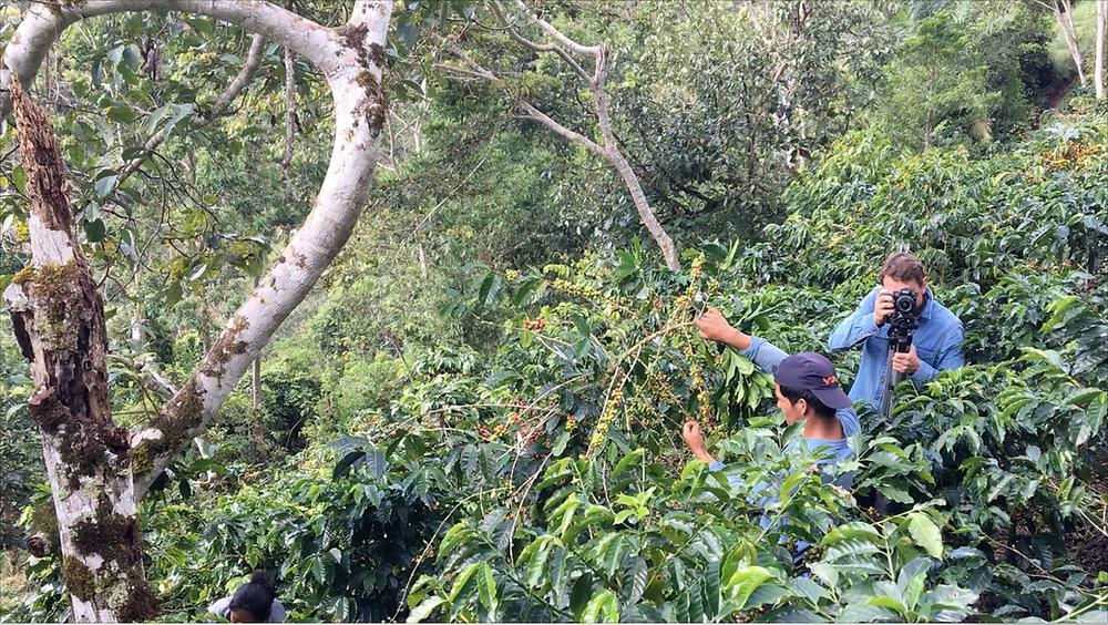 Plantation de Café Bio et Équitable