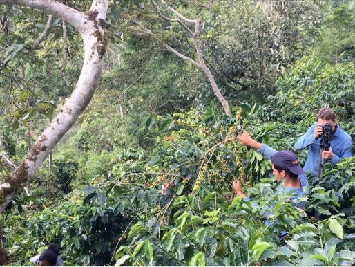 Savez-vous (vraiment) comment on récolte le café bio et équitable?